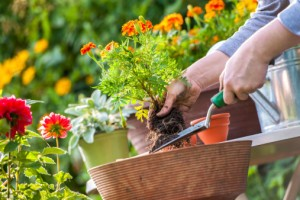 Got a Green Thumb? Get Your Soil Tested