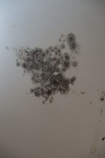 How To Check For Mold In Your House