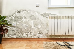 Why you shouldn't just ignore mold in your home