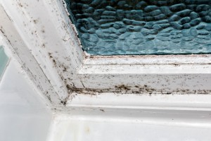 Contamination Concerns – Mold/Fungus