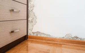 Is Mold in the Home a Big Deal?